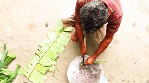 Bangladesh Banana