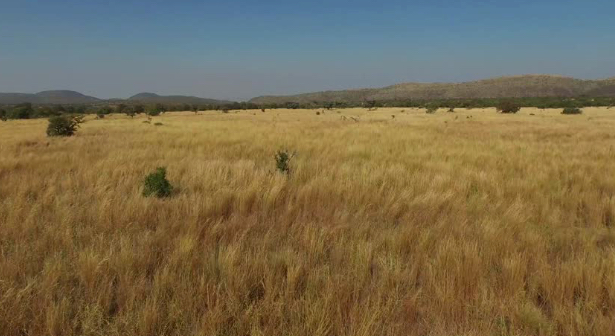 Dry Grass in South Africa