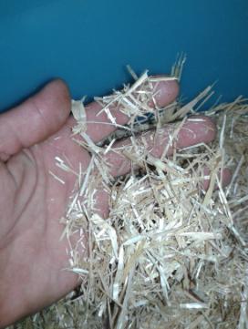 Finely Chopped Straw