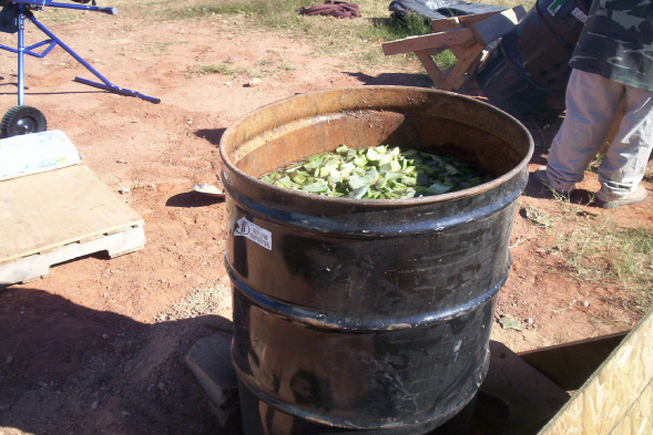 Nopales Barrell In Texas