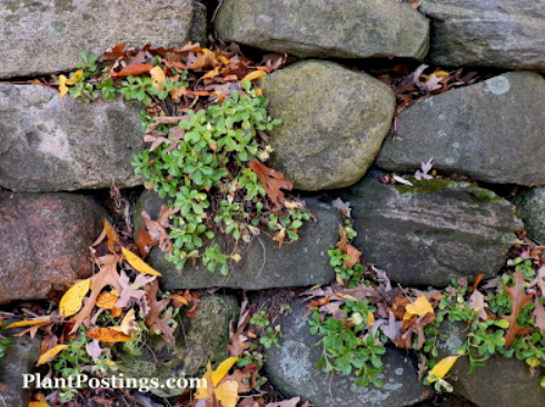 plantpostings.com